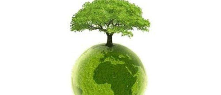 Article : Mali, ce pays qui ignore que sans plante, il n'y a de vie sur terre
